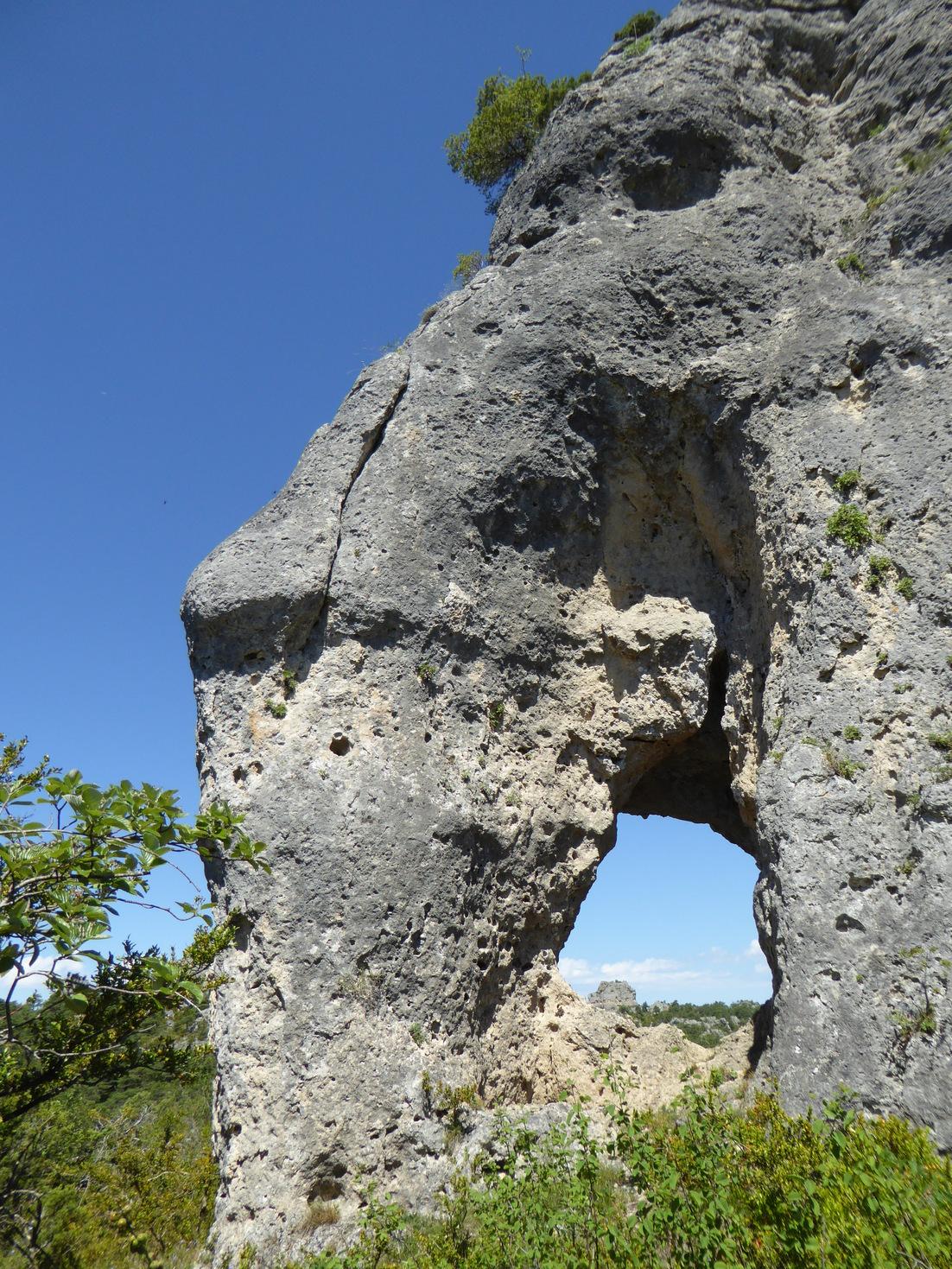 Elephantcausse.jpg